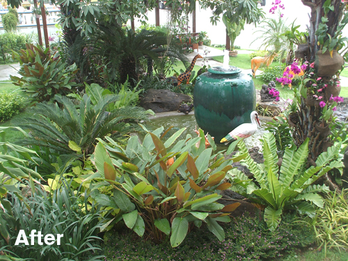 Tropical pond landscape before and after thai garden for Plants around garden pond